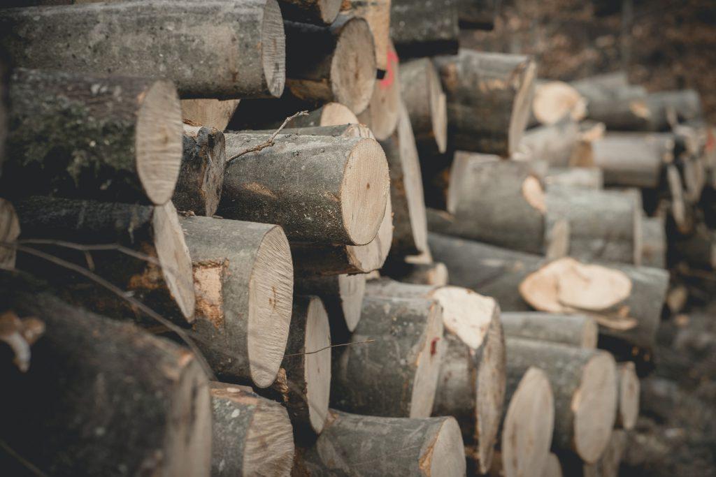 świezo ścięte drewno w lesie